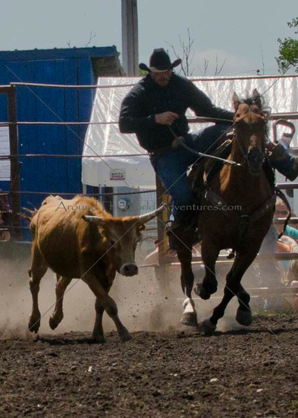 Steer Wrestling Sunday 2012