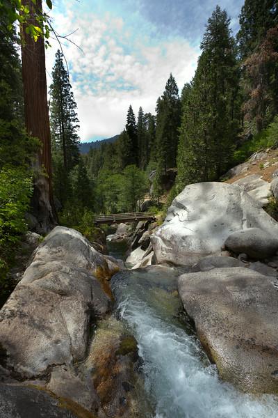 Sequoia_0571.jpg