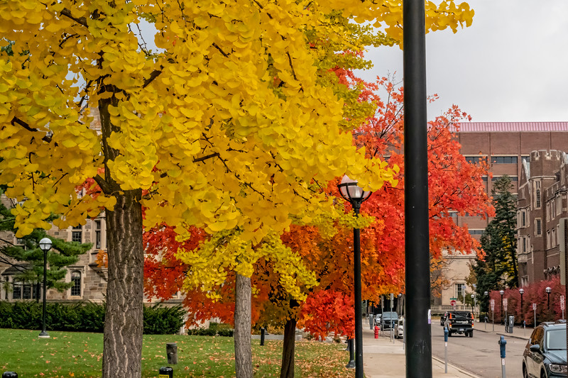 Fall foliage on campus