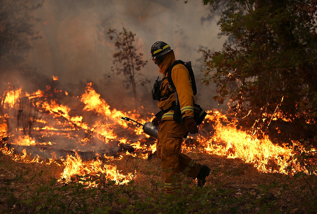 . GROVELAND, CA - AUGUST 21:  A firefighter from Ebbetts Pass Fire District uses a drip torch to light a back fire while battling the Rim Fire on August 21, 2013 in Groveland, California. The Rim Fire continues to burn out of control and threatens 2,500 homes outside of Yosemite National Park. Over 400 firefighters are battling the blaze that is only 5 percent contained.  (Photo by Justin Sullivan/Getty Images)