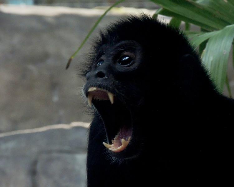 monkey 01.jpg
