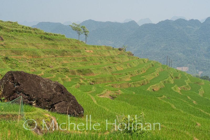 Rice terraces at Pù Luông Nature Reserve, Vietnam
