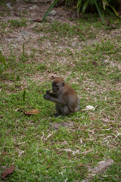 20091214 - 17371 of 17716 - 2009 12 13 - 12 15 001-003 Trip to Penang Island.jpg