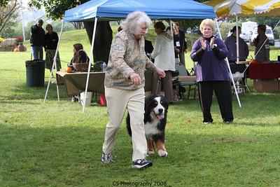 Veterans 11+yrs Dog