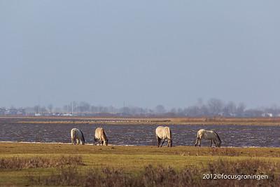 Natuurgebied Lauwersmeer