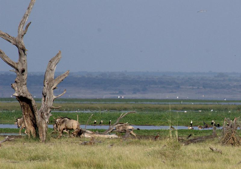 Lake Manyara 4.jpg