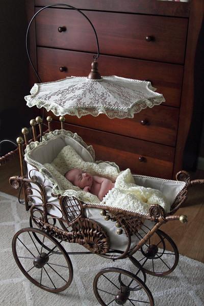 Newborn Portfolio