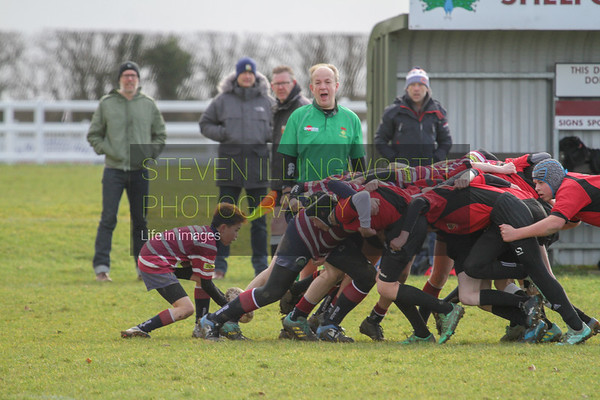 Shelford v Colchester at home