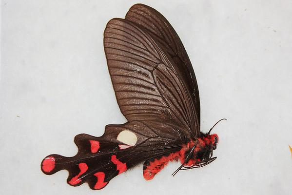 butterflies 4 ebay