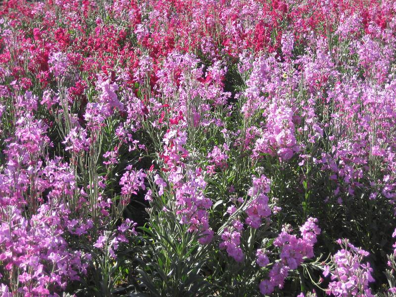 Cholula Mar 2008 061.jpg