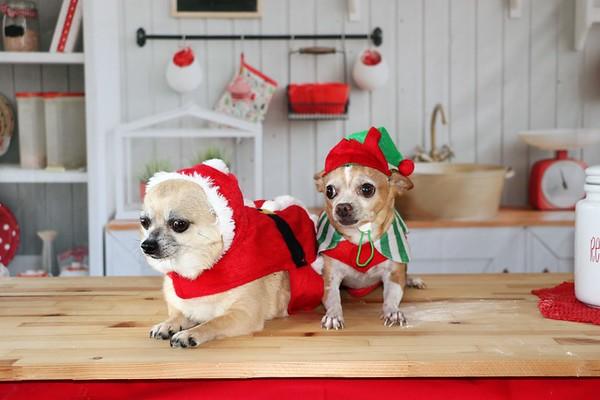 Chico and Peanut | Christmas 2020