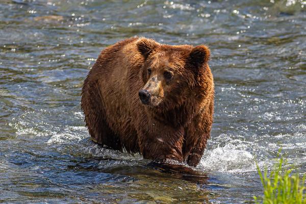 Alaska July 2021 (More images & Video in Alaska Gallery)