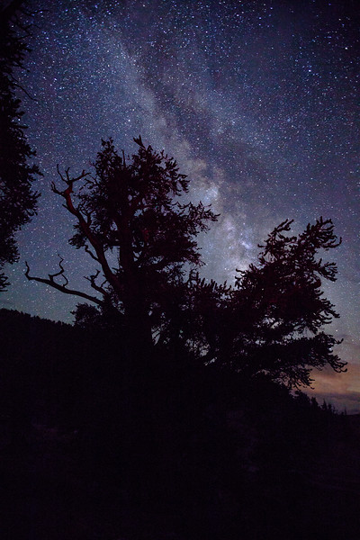 Bristlecone and the Milkyway, The Ancient Bristlecone Pine Forest
