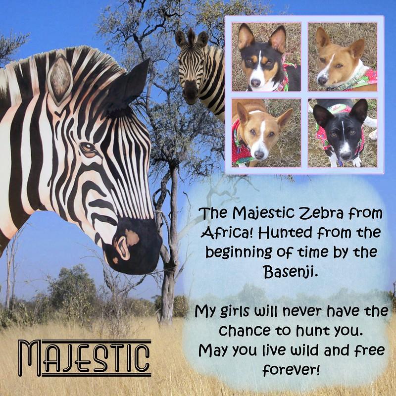 Zebra-000-Page-1.jpg