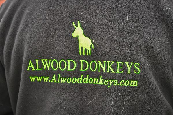 The Beverley Donkey Derby
