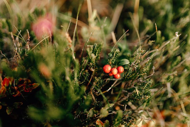 Sedinta foto in natura-15.jpg