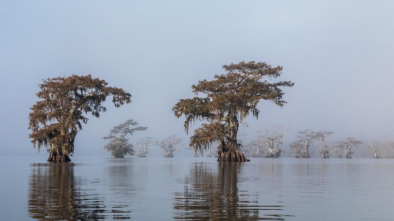Cypress_Swamps_1117_PSokol-2383.jpg