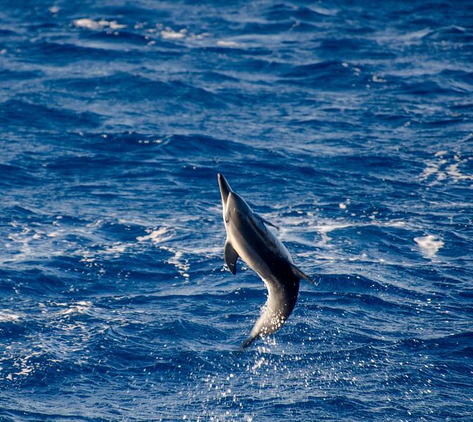 Big Island - Whale Watching 024.jpg