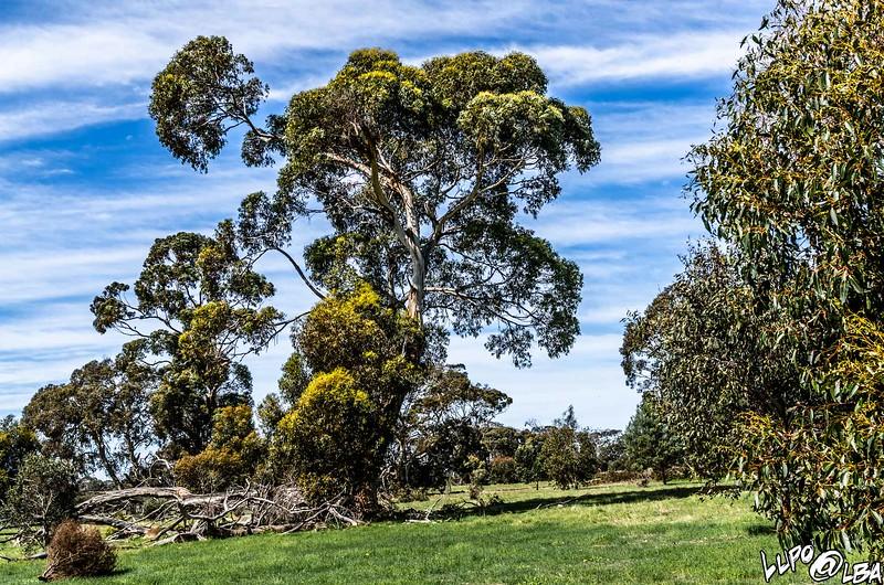 Australia-331.jpg