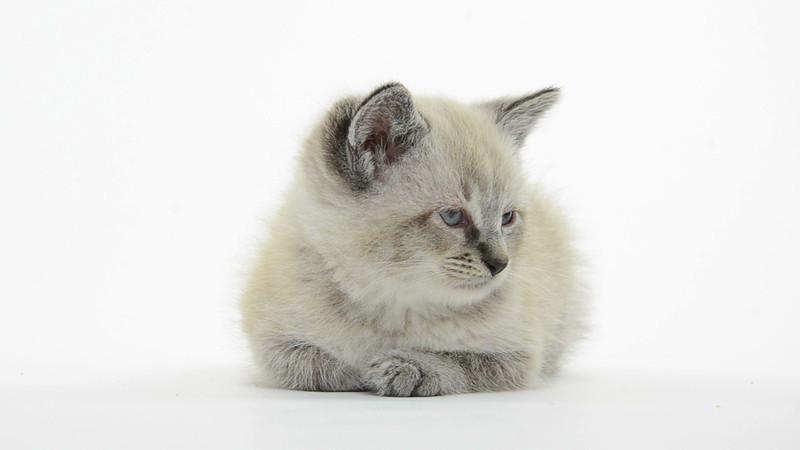 Kitten_11_IS_HD.mov