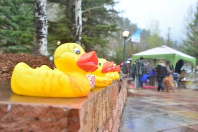 2016 Duck Race