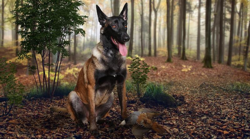 dog-perdrix.jpg