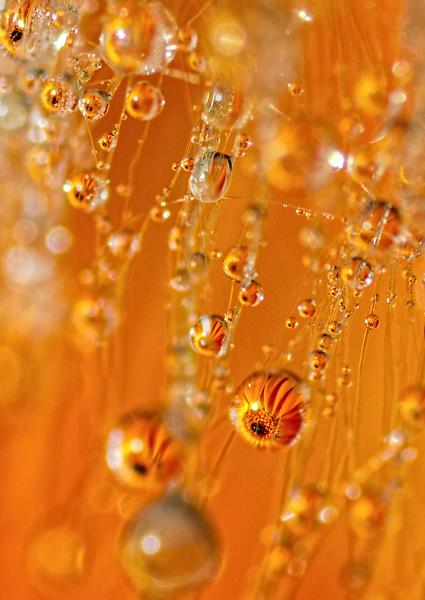 Gerber in a Bubble