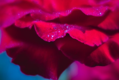 """""""Passionate Wonder"""" (photography) by Heather Fenzau"""
