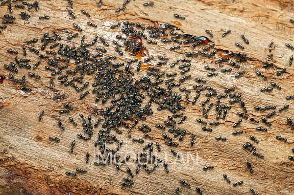 Ants, bee's, wasps