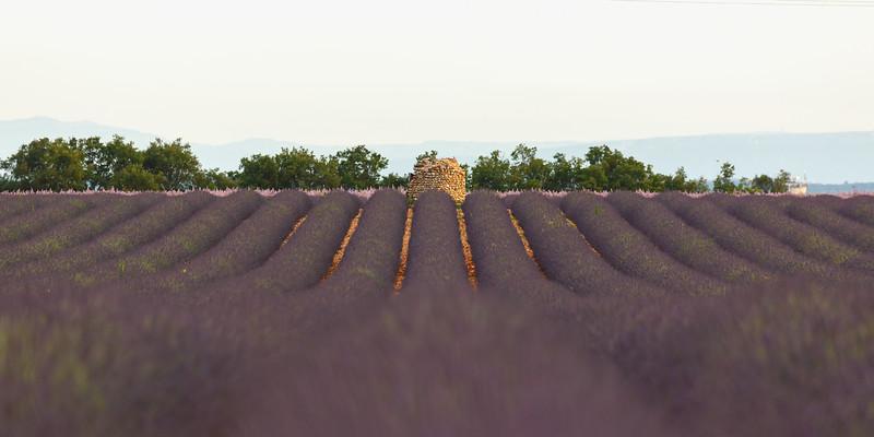 valensole-lavande-lavender_D3_4042.jpg
