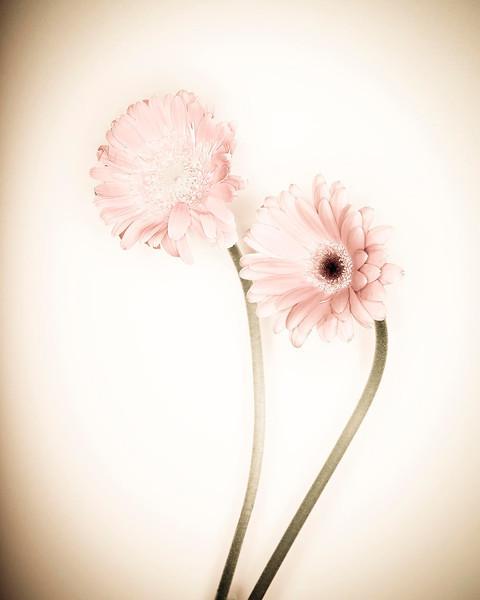 Flowers-Ringflash_V9A7504.jpg