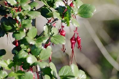 Elfin Forest: Flora & Fauna