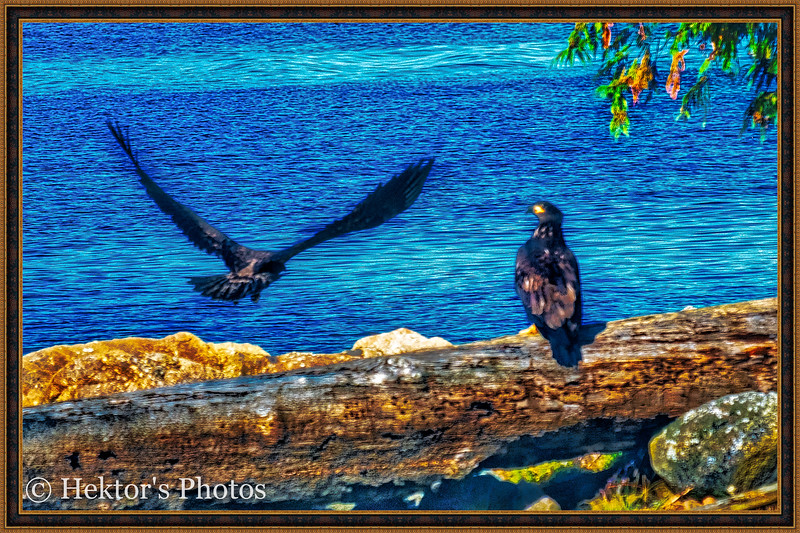 Lighthouse-Eagles-Totems Excursion-10.jpg