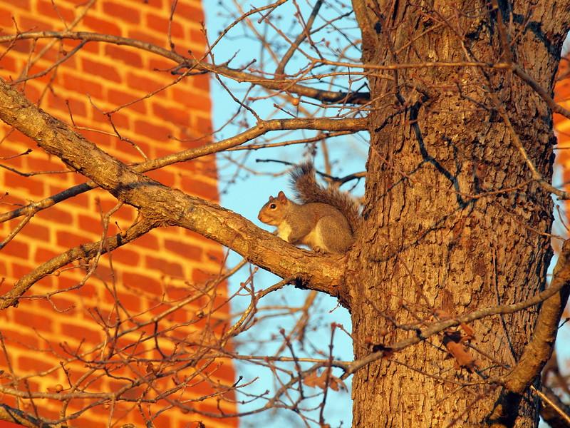 Squirrel-007.JPG