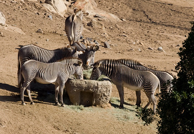 San Diego 2007 - Wild Animal Park