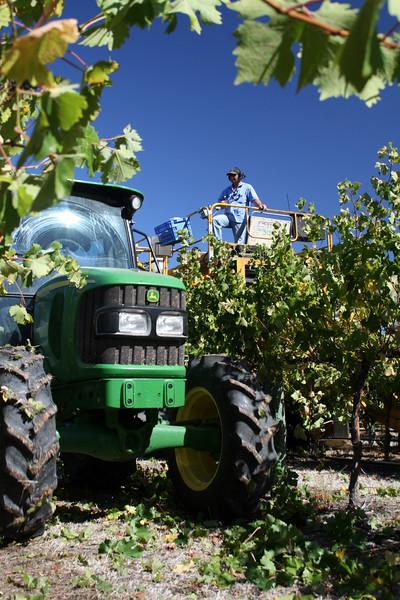 Harvest8.jpg