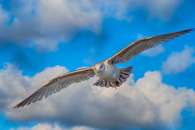 180222 Seabirds of Carlsbad CA