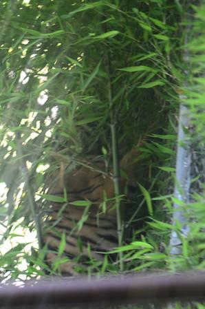 San Diego Zoo - Aug 6, 2011