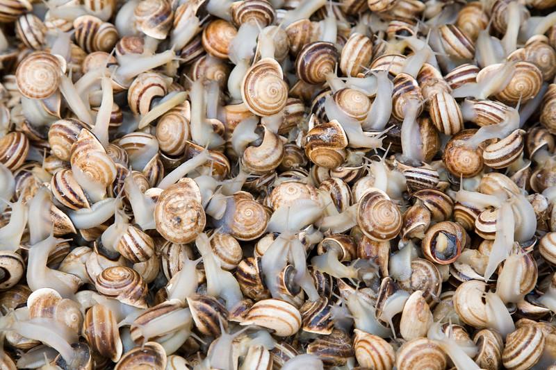 Snails for sale, Spain