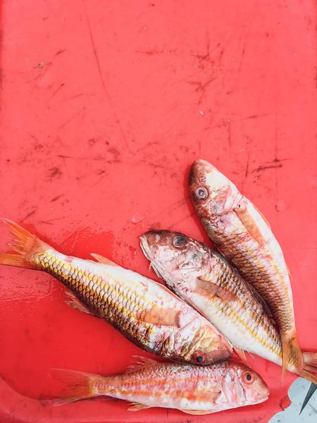 marseille fish market 9.jpg