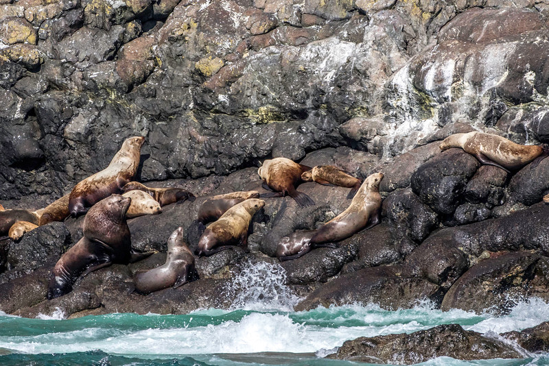 Sea Lion colony, Resurrection Bay