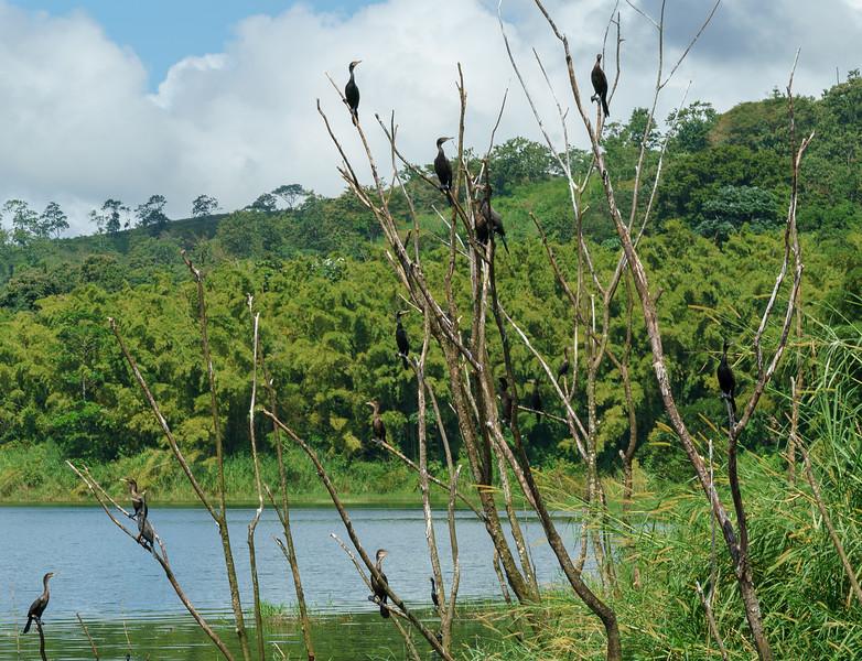 Costa Rica 2015-2632.jpg