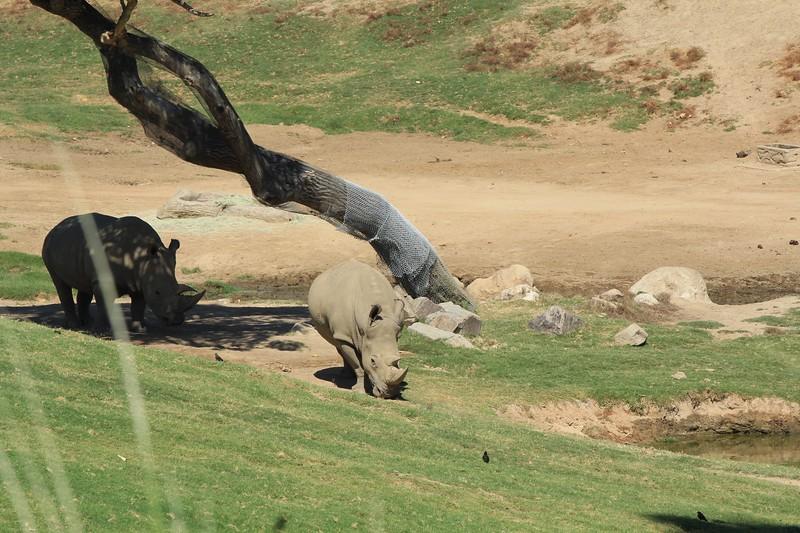 San Diego wild animal pakr 201700042.jpg