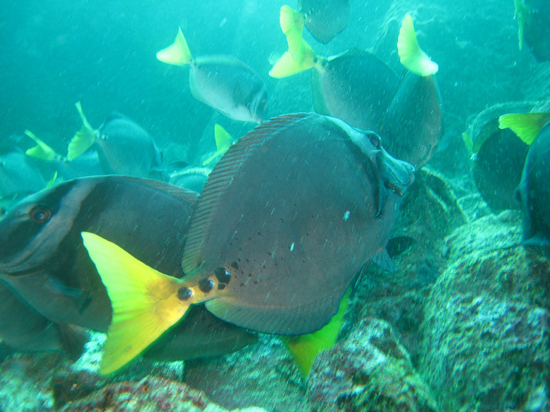 Diving in the Galapagos (136 of 392)