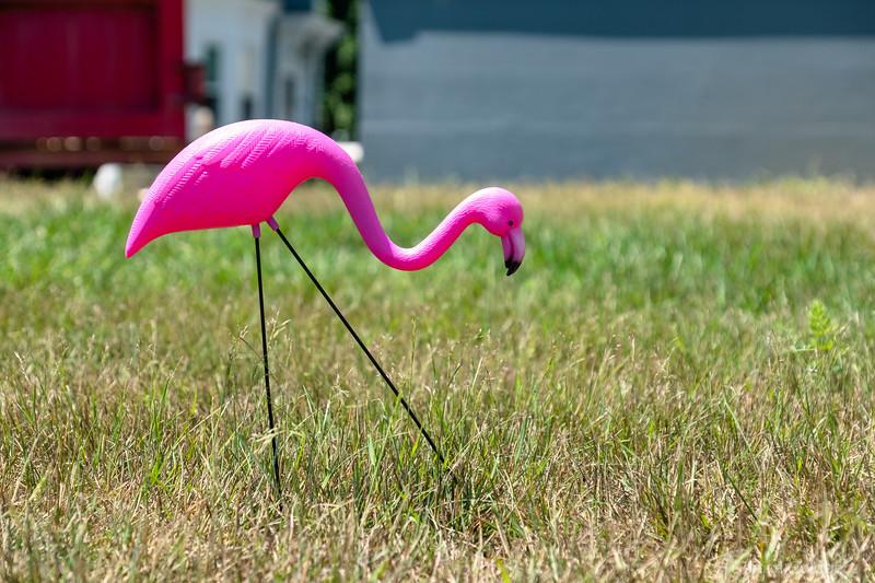 a flamingo on grass