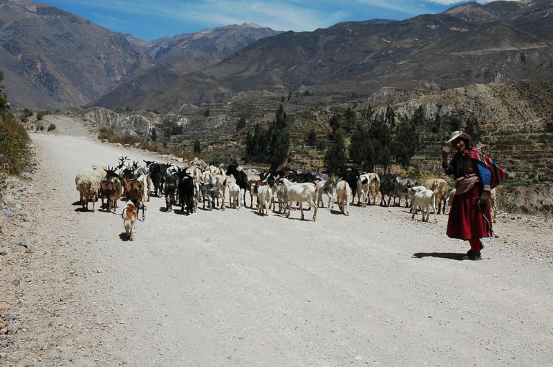 Peru Ecuador 2007-053.jpg