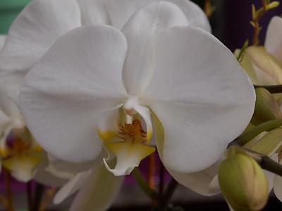 Orchids_2013