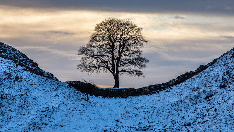 Winter on Hadrian's Wall at Sycamore Gap