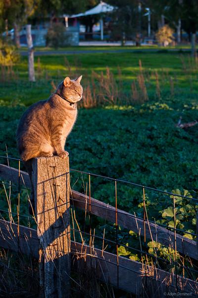Gus surveying his kingdom