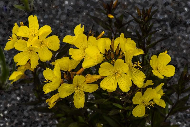 DSC_1861 Yellow Flowers PS- LL NEF mod.jpg